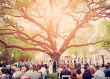 """10 façons d'utiliser un arbre en """"arche de cérémonie"""""""
